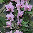Botanical_002