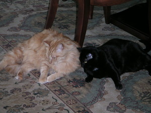 More_cats_006