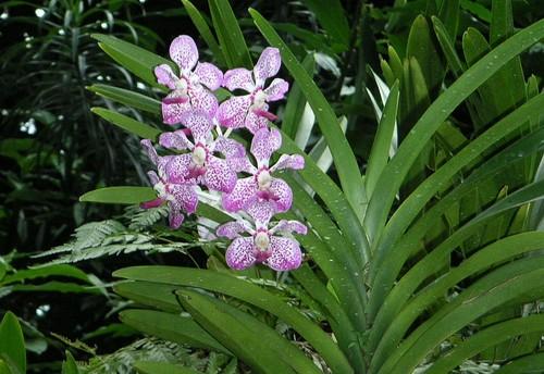 Singapore_dec_2004_028