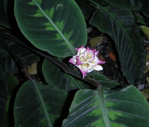 Singapore_dec_2004_061