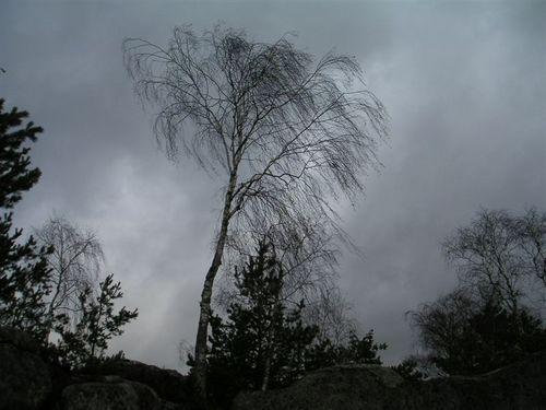 Forestdec_2003_004