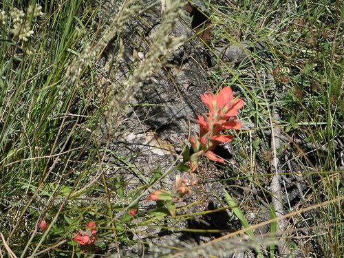 Tucsonsept2005_037