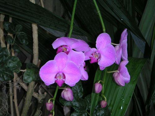 Botanical_001