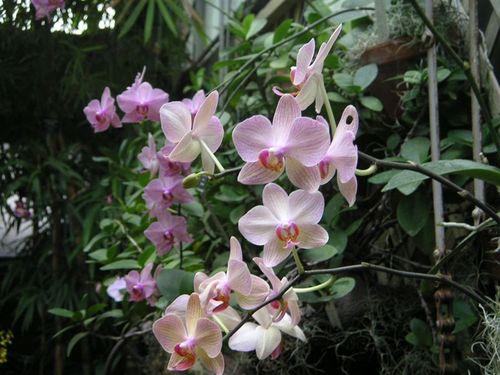 Botanical_003