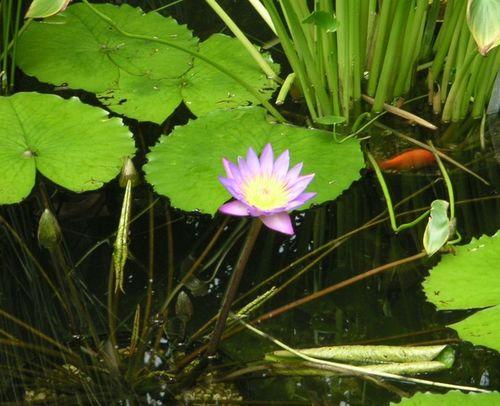 Botanical_006